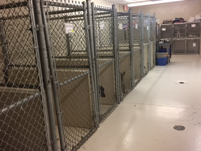 A view of the boarding area for dogs